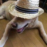 CLIO'S Blog